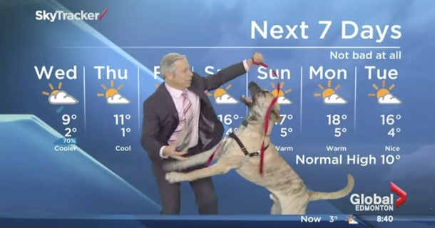 Giant Dog Ruins Weather Report In Best Way Possible